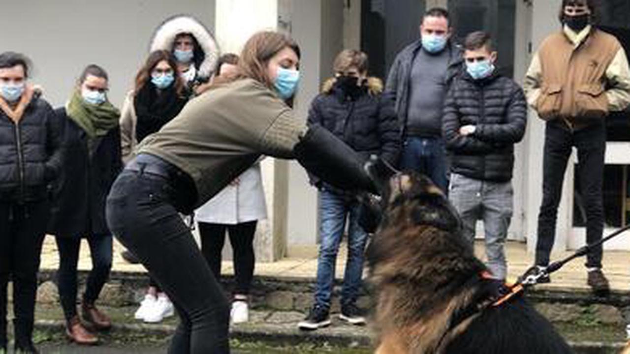 REPORTAGE. À Quimper, les facteurs apprennent à ne plus être la bête noire des chiens