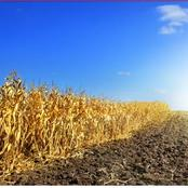 How does high temperatures damage crops on the farms ?