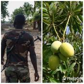 After Plucking A Mango, Check Out What Happened To A 10 Yrs Old Boy In The Hands Of A Nigerian Army.