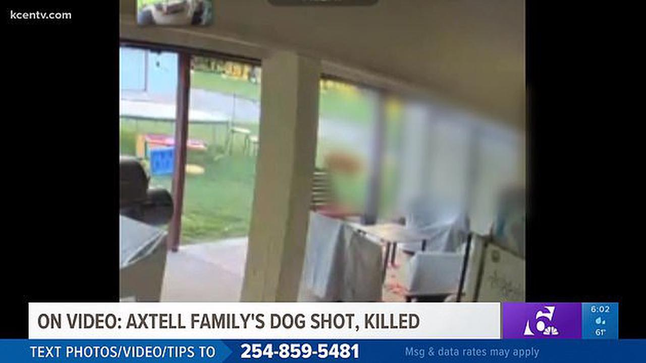 Horrific moment golden retriever is shot and killed in his own backyard while family were out camping