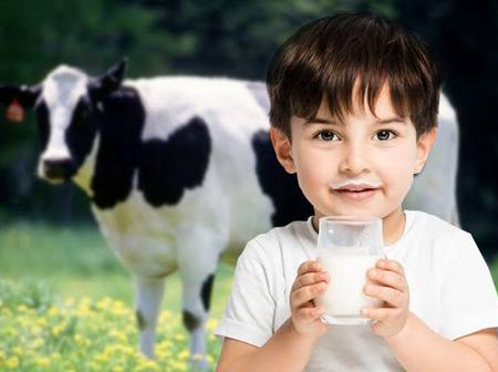 What Allah And His Messenger (PBUH) Clarify To Us About Cow Milk.