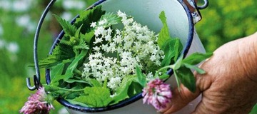 Gardening: How to keep your crops fruiting throughout summer