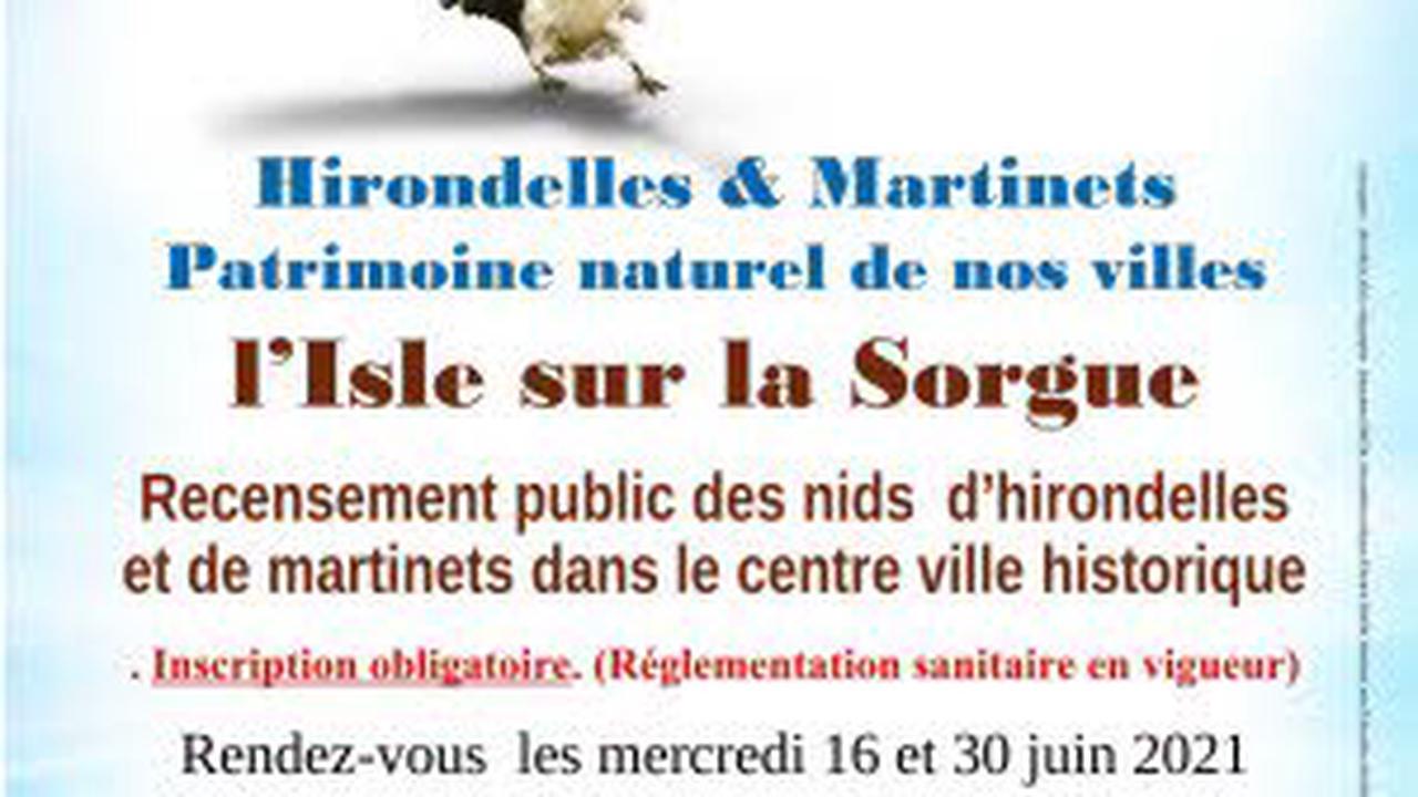 Comptage des nids d'hirondelles et de martinets : Balade, visite guidée à L'Isle-sur-la-Sorgue