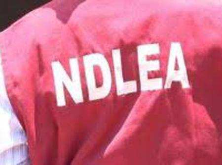 Recruitment: NDLEA Releases List Of 5,000 Successful Candidates