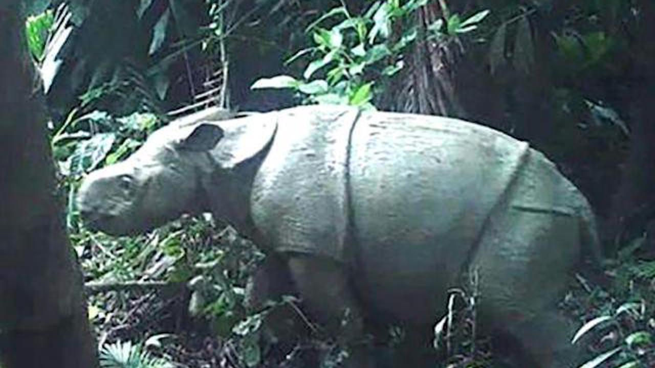 Les fossiles de rhinocéros plus grands qu'une girafe découverts en Chine