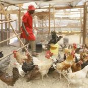 Are You Unemployed? See How Kienyeji Poultry Farming Might Turn to be Your Main Hustle