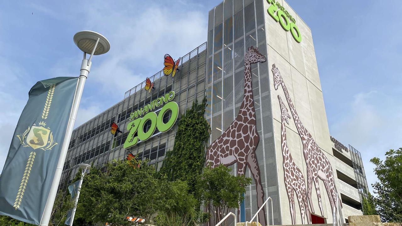San Antonio Zoo adds a nearly 50-foot tall giraffe off U.S. Highway 281