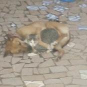 La disparition du chat est-elle forcément un signe de malheur?
