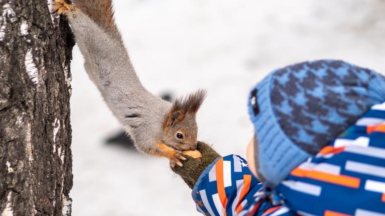 Wo leben Eichhörnchen? Spannende Fakten über den Lebensraum der Nager