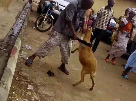 Man Beats Goat For Eating His Jollof Rice (pics)