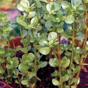When You See This Plant Growing Outside Your House, Don't Kill it. See the importance