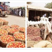 Reactions as man shares photo of plenty onions he bought at a very low price in Gombe.