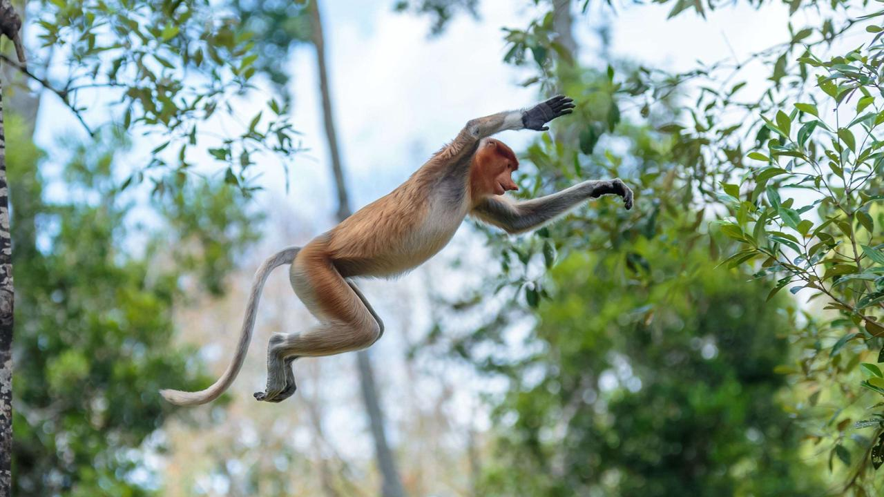 Reports of monkeys swinging from cemetery trees in Ohio have police on the lookout