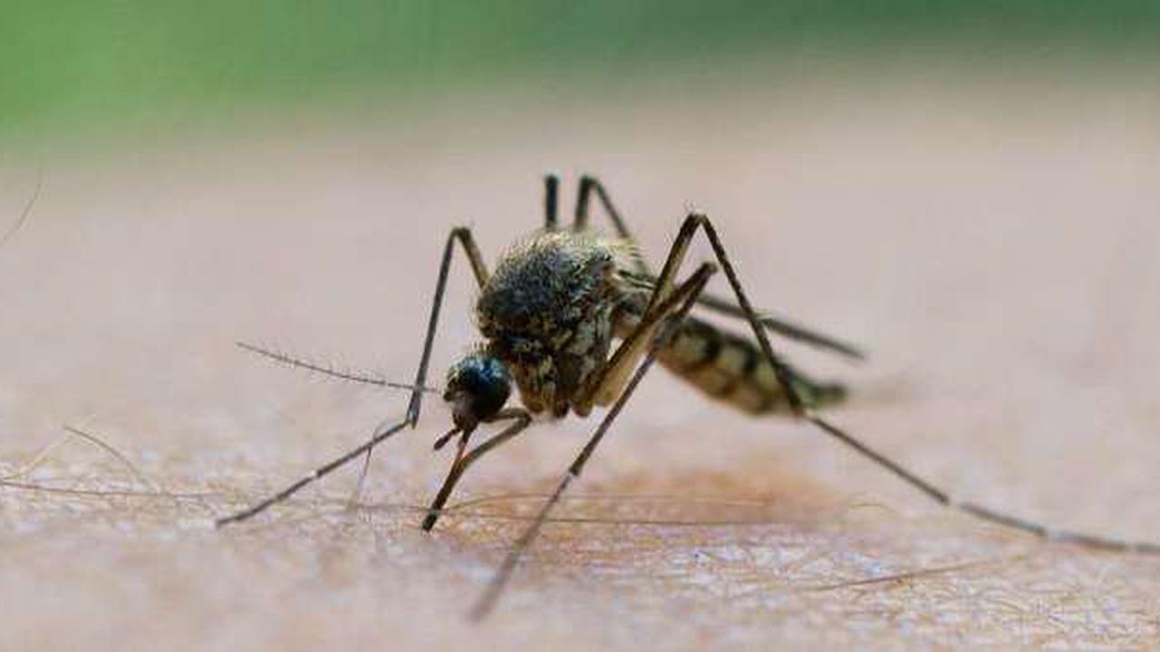 Fünf Tipps gegen Mückenstiche