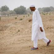 Buhari Owns A Farm In His Village, See What It Looks Like