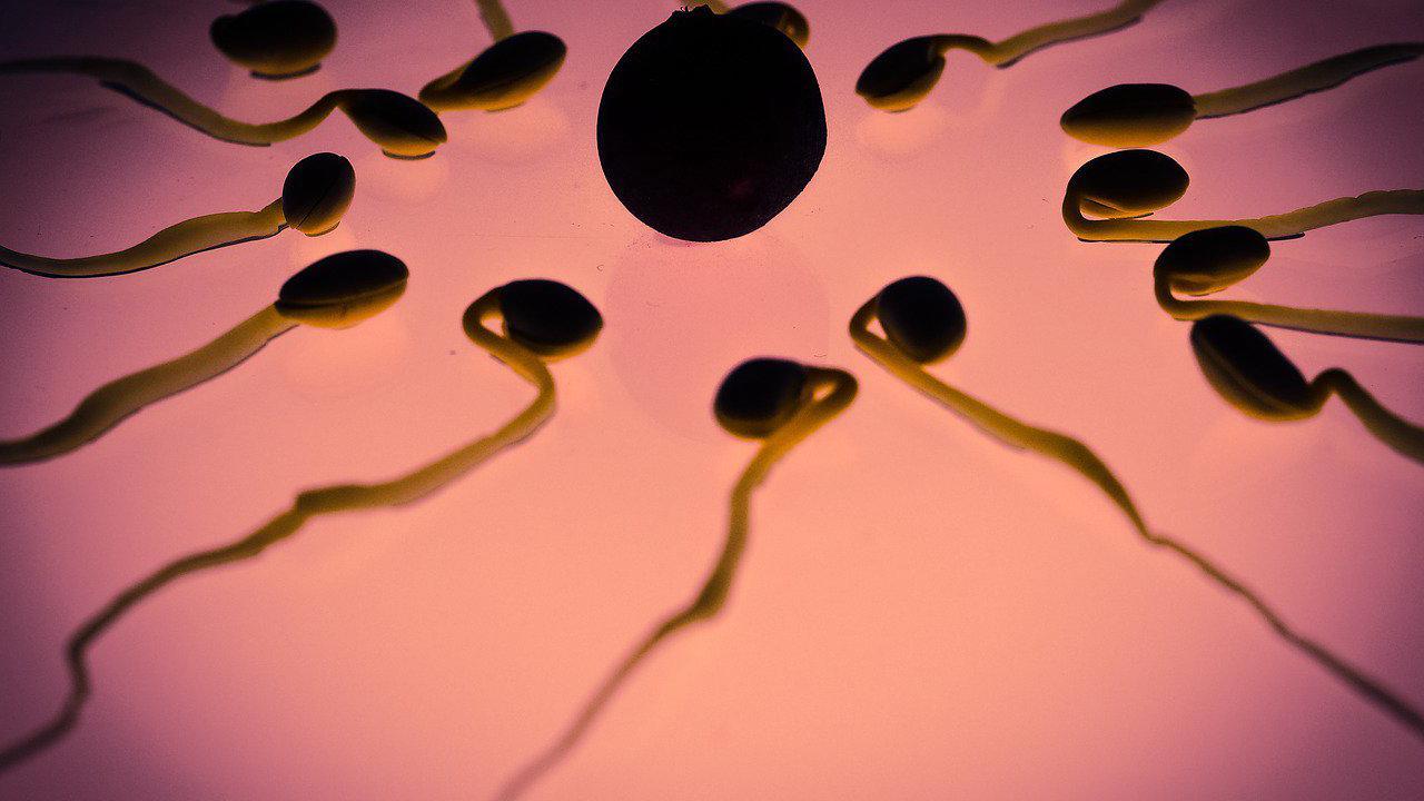 Les spermatozoïdes tiendront plus longtemps que vous dans l'espace