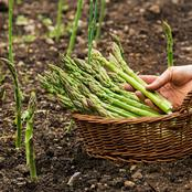 Garden Tips Needed To Plant Asparagus