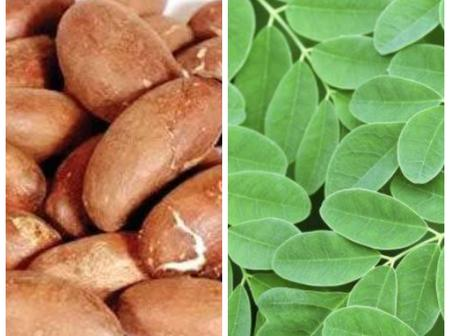 I Soaked Bitter Kola And Moringa Leaf In Dry Gin For 3 Days, This Was What Happened To My Health