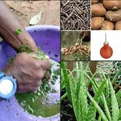 Learn to be your own doctor with African herbs.