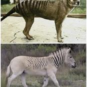5 Animals That Have Existed Before But Do Not Exist Anymore