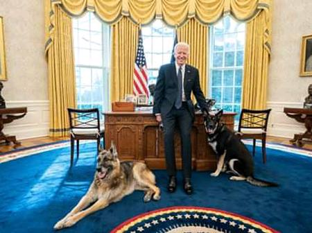 Photo Of US President Joe Biden With Two Dogs Champ And Major In The Oval Office