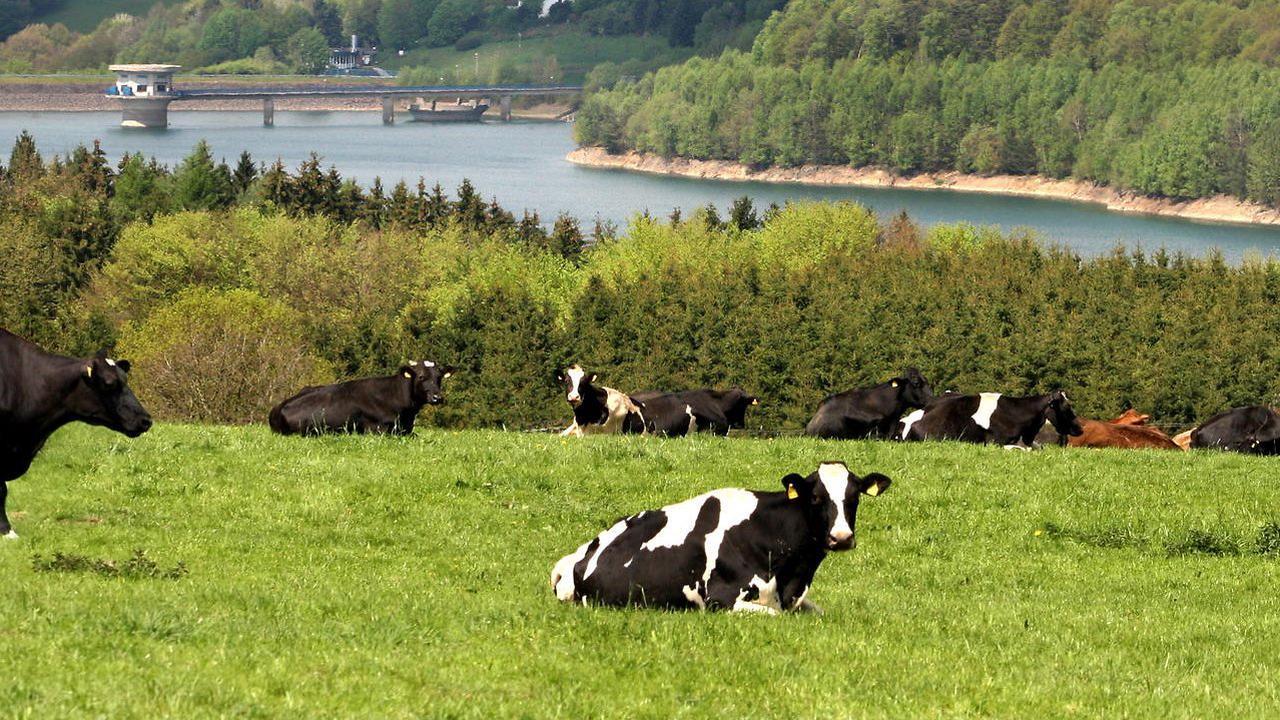 Landwirtschaft in Rhein-Berg: Kreis bewirbt sich als Öko-Modell
