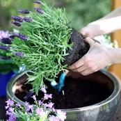 The Right Way To Use Pots To Grow Plants in Your Home Effectively