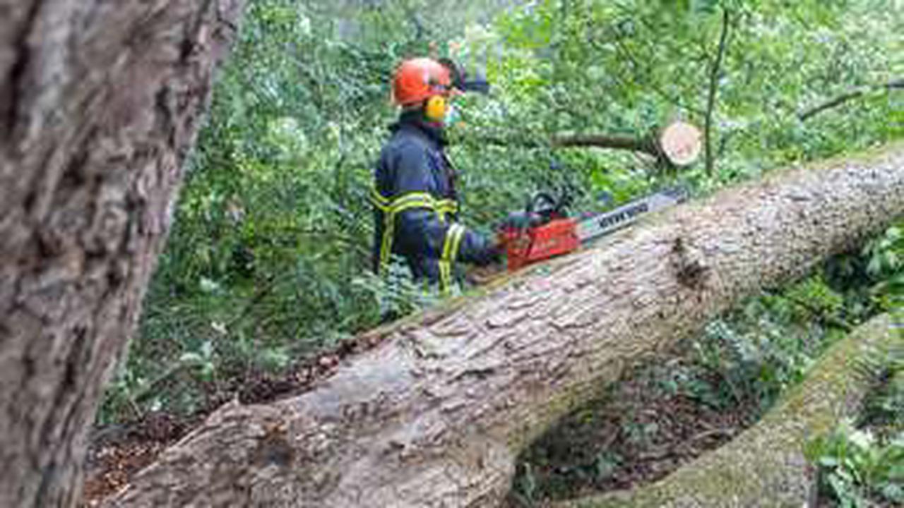 Wetter in Hamburg: Sturm sorgt für Feuerwehreinsätze