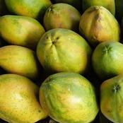 How To Start A Lucrative Pawpaw (Papaya) Farming Business In Nigeria