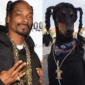 See pictures of Snoop Dogg and a dog that sparked reactions on social media