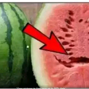 If You Open A Watermelon And See These Cracks, Throw It Away, Do Not Eat It… Opinion