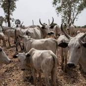 Mixed Reactions as Blockade causes Beef Scarcity, Rising Of Food Items in Lagos, Ogun, Oyo.