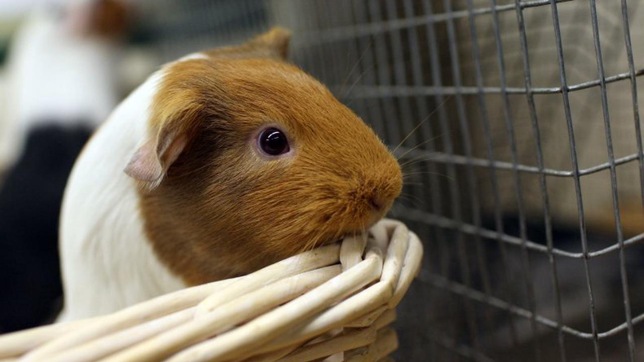 Penzance woman set fire to her home and killed pet dog inside