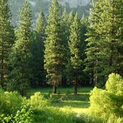 Best And Fast Growing Trees That Will Make Your Compound Look More Beautiful
