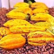Commercialisation du Café-Cacao : attention au marché noir dans le Djuablin !