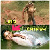 See That Catfish That Can Grow Bigger Than A Lion