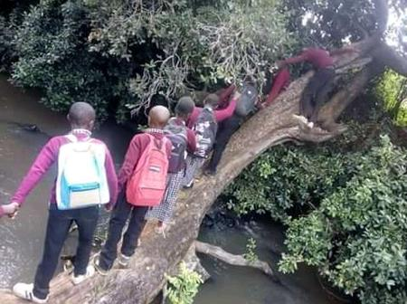 Photos Of Pupils At Wangui Primary School Using A Tree To Cross A Huge River.