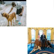 Zlatan shows off his dog after US president shared photos of his dogs in the oval office