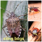 Here Are The Top 10 Most Annoying Insect Around The World, Which One Do You Dislike The Most