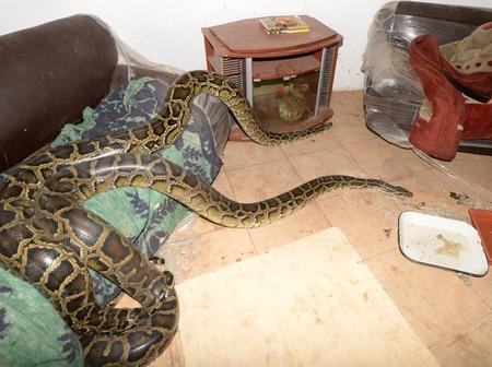 Gogo turns into a giant snake after being arrested by the police