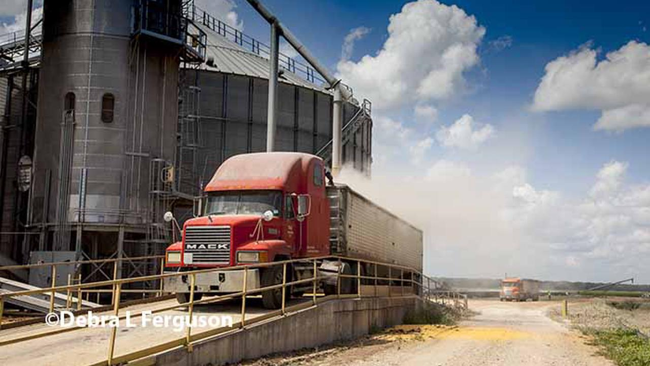 DTN Grain Open: Trade Stabilizes After Monday Volatility