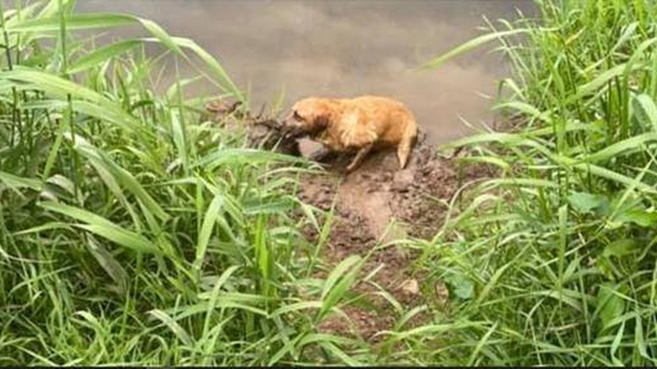 Hero fishermen come to aid of dog stuck down steep embankment down to River Dee