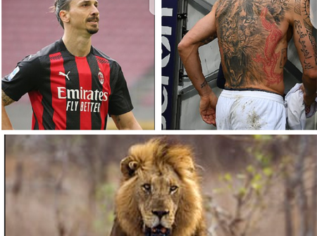 Ibrahimovic is called a lion and he has a lion tattoo, See the reason why