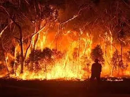 N/R: One Dead In Bush Fire.