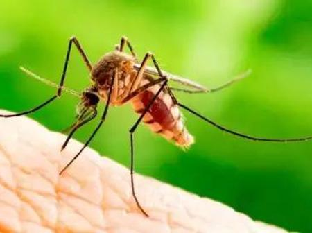 Five Natural Ways To Eliminate Mosquitoes From Your Home