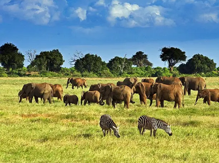 Top 4 Rated Tourist Attraction in Kenya