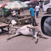 Traders Captured Selling Food Around a Dead Donkey Near Kabocha House, Rongai
