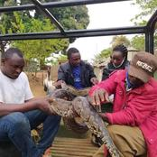 Python Suspected to Have Swallowed a Motorist Captured by 23-Year-Old Man in Murang'a (Photos)