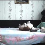 Man Forbade His Dogs From Sleeping On His Bed, He Installed A Camera And Discovered The Worst.