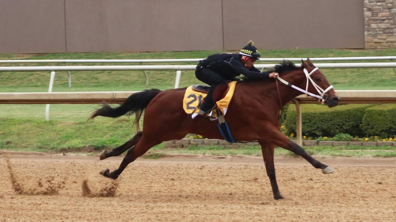 More Than 120 Consigned To Texas 2-Year-Olds In Training Sale - Horse Racing News